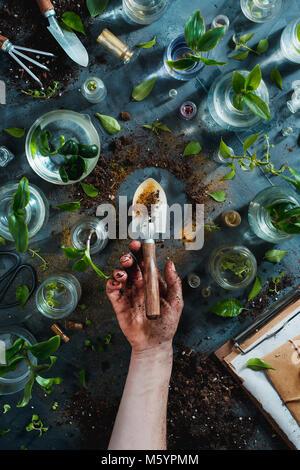 Pouce vert concept avec une bêche d'or, les plantes, le sol, les bocaux en verre avec des outils de jardinage et de semis. Jardin botanique de frais généraux still life with copy space. Banque D'Images