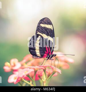 Résumé arrière-plan flou autour de papillon aux ailes rouges et jaunes Banque D'Images