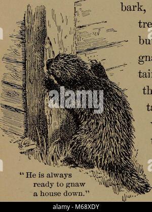 'La vie familière en champ et forêt; les animaux, oiseaux, grenouilles, salamandres et d' (1898)