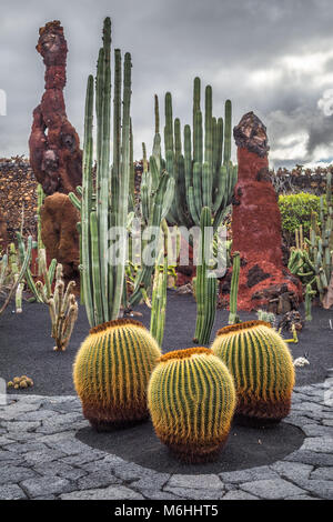 Cactus dans le jardin de cactus, Lanzarote, îles Canaries, Espagne Banque D'Images