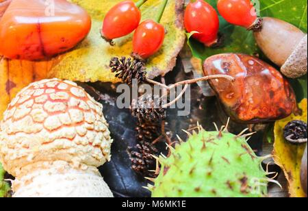 La vie encore l'automne, de châtaignier, de glands, de champignons et de la pierre sur fond de congé Banque D'Images