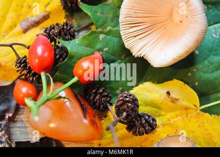 La vie encore automne, champignon, acorn châton avec pierre sur fond de bois Banque D'Images