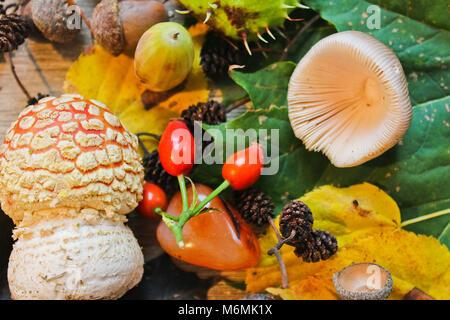 La vie encore l'automne, des chatons, des glands, châtaignes, champignons avec de la pierre sur fond de bois Banque D'Images