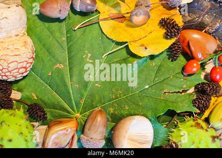 La vie encore l'automne, des chatons, des glands, châtaignes, champignons avec pierre sur big quitter Banque D'Images