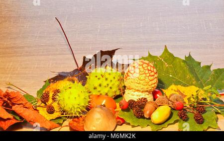La vie encore l'automne, de châtaignier, de champignon, et des chatons avec fond de bois en pierre Banque D'Images