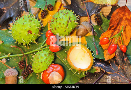 La vie encore l'automne, des chatons, des glands, châtaignes, champignons sur fond bois brier Banque D'Images