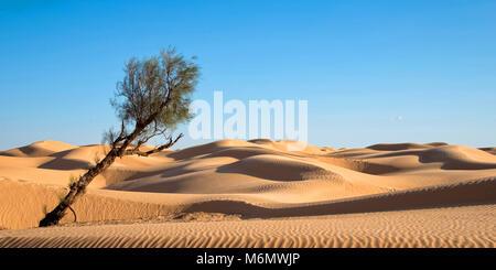 Dunes de sable dans le désert du Sahara, la Tunisie du Sud
