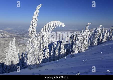 Allemagne, Berlin, Isarwinkel, Brauneck, paysage d'hiver, Banque D'Images