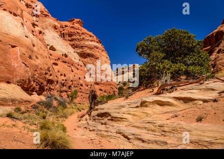 Les USA, Utah, Wayne County, Torrey, Capitol Reef National Park, Cohab canyon Banque D'Images