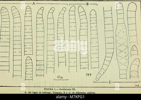 Boletin de la Sociedad de Biología de Concepción (1949) (20361332726) Banque D'Images