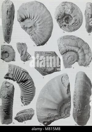 Bulletin du Musée Histort naturelles. Série Géologie (1998) (19873332013)