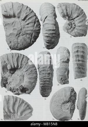 Bulletin du Musée Histort naturelles. Série Géologie (1998) (20494283575)