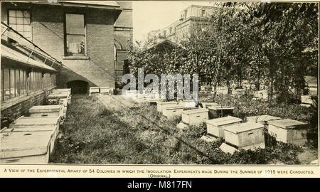 Bulletin du Ministère de l'Agriculture des États-Unis (1916) (19879664773)