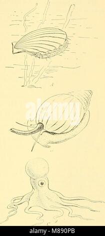 La biologie élémentaire; une introduction à la science de la vie (1924) (21026575410)