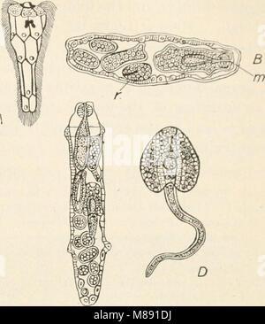 Éléments de biologie; un texte utile-livre de corréler la botanique, la zoologie et la physiologie humaine ((c1907)) (21053186400)