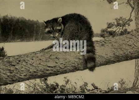 Bien connaître la vie au champ et forêt; les animaux, les oiseaux, les grenouilles et salamandres, (1898) (14568966597)
