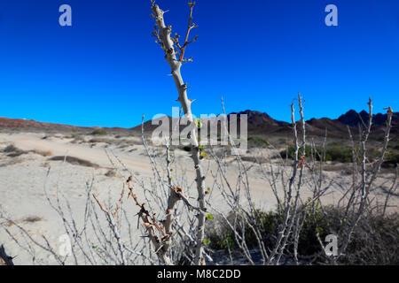 Plantes du désert Banque D'Images