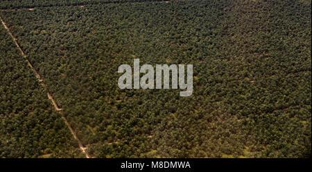 Arial image d'un palmier à huile (Elaeis guineensis) plantation en Malaisie. Prise en février 2018.