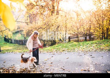 Une vieille femme avec chien sur une promenade en automne la nature.
