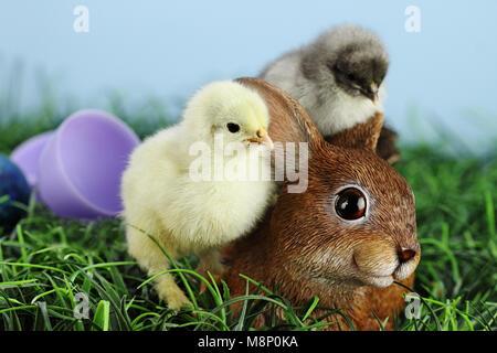 Peu de blanc et jaune poussin de Pâques par permanent et adorable lapin marron en résine avec un poussin gris dormant Banque D'Images