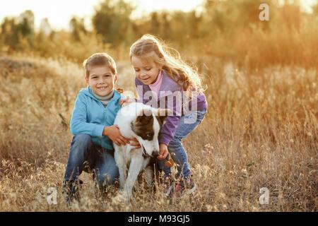 Le temps passé en famille. Frère et sœur à pied avec un animal. Jeune race de chien husky de Sibérie. Golden meadow au coucher du soleil. Banque D'Images