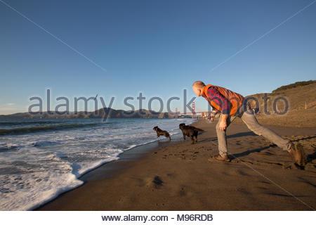L'homme aux cheveux rouges de lancer un bâton dans l'eau sur la plage pour ses deux retrievers du Labrador brun Banque D'Images