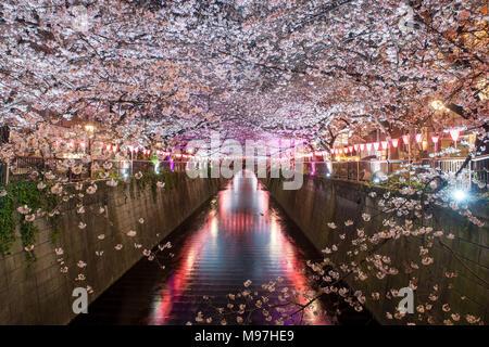 Cherry Blossom bordée de Meguro Canal de nuit à Tokyo, Japon. Printemps en avril à Tokyo, Japon. Banque D'Images
