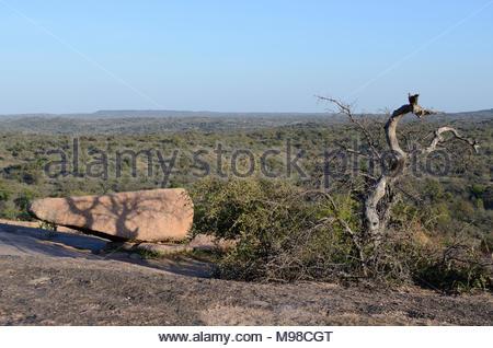 Arbre mort ombre coulée sur la roche. Fin d'après-midi à l'Enchanted Rock State Natural Area dans le Texas Hill Country. Partie de Texas State de parcs nationaux. Banque D'Images