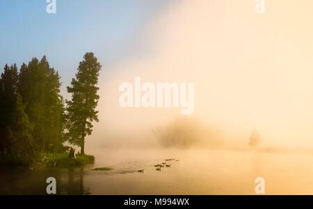 Dawn mist ascenseurs pour révéler la rivière Yellowstone et oies baignade dans le Parc National de Yellowstone, Cooke City, Montana, USA. Banque D'Images