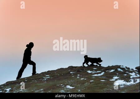 Dog walking on a snowy hilltop en Ecosse Banque D'Images