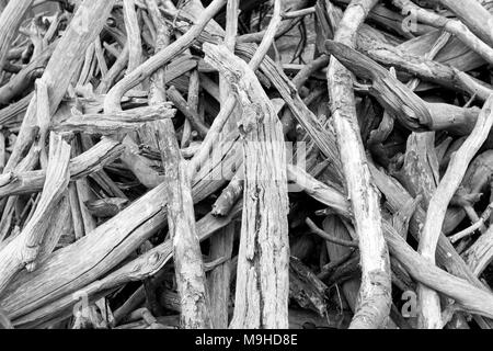 Tourné en noir et blanc des vieux, mort et sec sweet chestnut tree branches empilées sur le sol. Banque D'Images