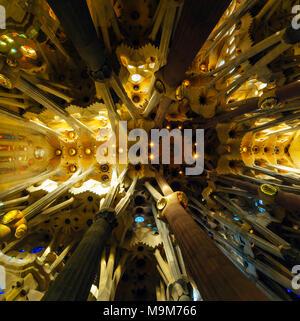 Grand angle de vue à l'intérieur de la Sagrada Familia, Barcelone Banque D'Images