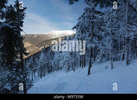 Franconia Notch State Park - mont Lafayette le long de Kinsman Ridge Trail dans les Montagnes Blanches (New Hampshire). Ce sentier mène au sommet du C