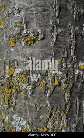 Close up de lichen sur un arbre Banque D'Images
