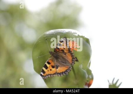Tête de poupée avec un papillon en double exposition Banque D'Images