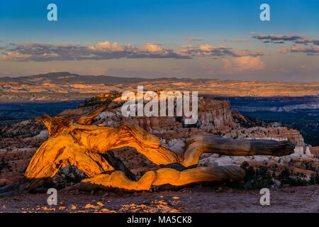 USA, Utah, Garfield Comté, Bryce Canyon National Park, le bois mort Point au lever du soleil