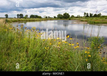 Étang des prairies de l'Iowa, Susans black-eyed (Rudbeckia hirta) en premier plan. Près de Manchester, Iowa. Banque D'Images