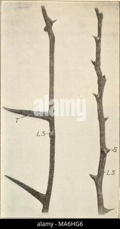 . Éléments de biologie; un texte utile-livre de corréler la botanique, la zoologie et la physiologie humaine