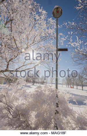Lanterne et arbres avec de la neige fraîche en Suède Banque D'Images