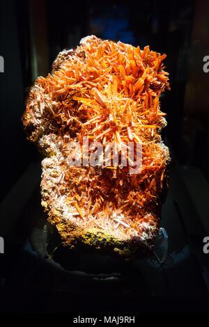Un spécimen de l'orange rougeâtre minéral Crocoite, (Chromate de plomb ). Banque D'Images