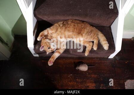 Le gingembre chat jouant dans les escaliers