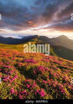 Flowes dans les montagnes pendant le lever du soleil. Paysage naturel magnifique dans l'heure d'été Banque D'Images