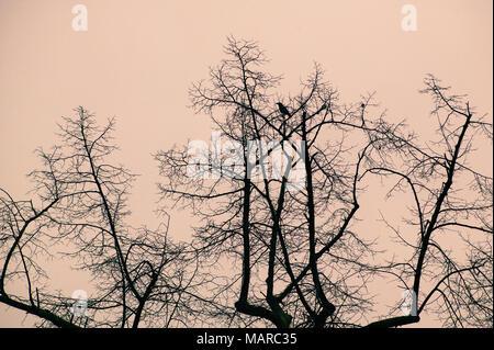 Crow sur arbres nus Banque D'Images