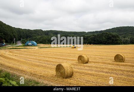 Bottes de foin s'asseoir après la récolte dans un champ d'Hokkaido rural