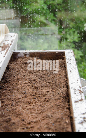 GLASGOW, ÉCOSSE - 11 juin 2013: nouveau compost dans un vieux tiroir dans une serre de Glasgow. Banque D'Images