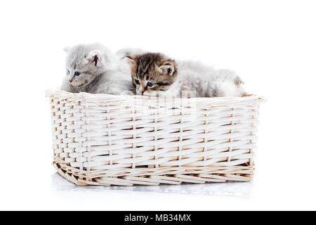 Les petites rayures brun aux yeux bleus moelleux chaton assis parmi d'autres chatons gris mignon en blanc panier en osier tout en se posant de photoset. Peu de nouveau-né adorable chatons gris charmant mignon bonheur Banque D'Images