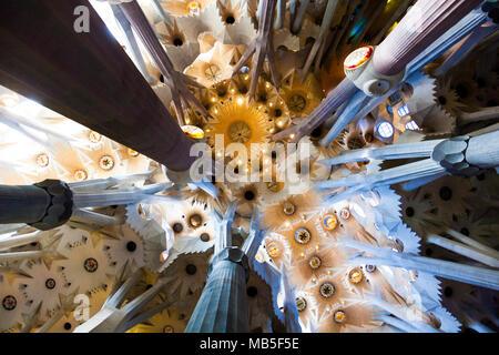 Plafond - intérieur de la Basilique de la Sagrada Familia d'Antoni Gaudi à Barcelone, Espagne Banque D'Images