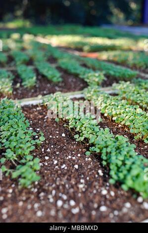 Les bacs de semis germent à l'intérieur d'une serre aux Etats-Unis.