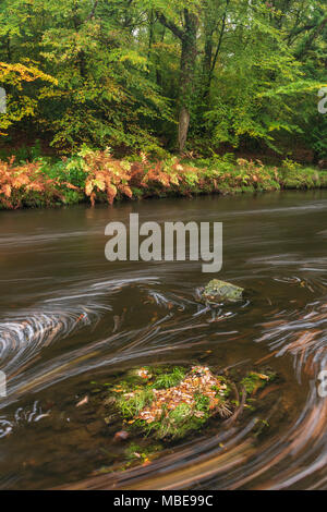 La rivière Dart qui s'écoule si Hembury Woods en automne dans le Dartmoor National Park, Devon, Angleterre. Banque D'Images