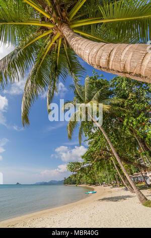 Palmiers sur la plage tropicale sur l'île de Koh Chang en Thaïlande